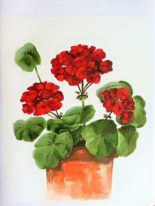 mediterranean-red-geranium