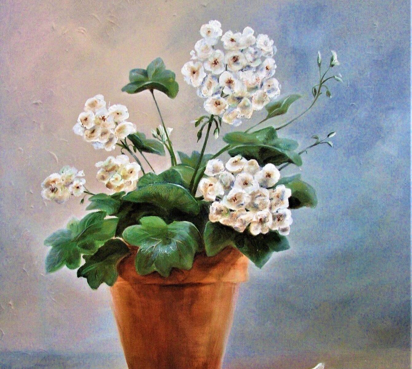 proud-white-geranium