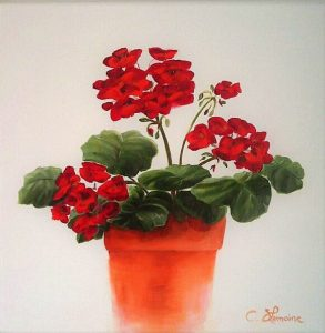 red-geranium-on-white-background
