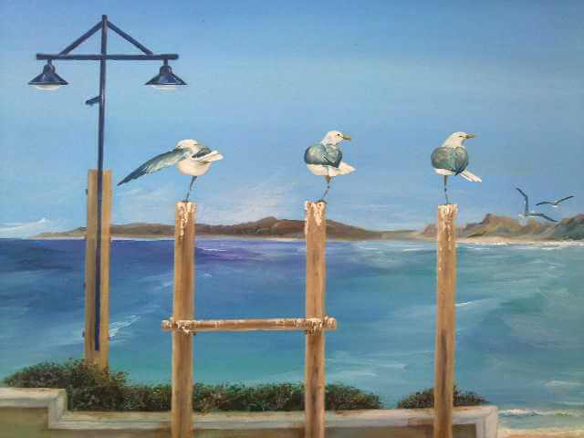 seagull-discussion-in-hermanus